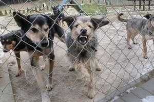 Schronisko dla psów w Sołdanach? Mieszkańcy protestują, wójt wyjaśnia