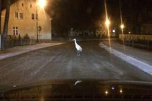 Uwaga na żurawie na ulicach Bisztynka