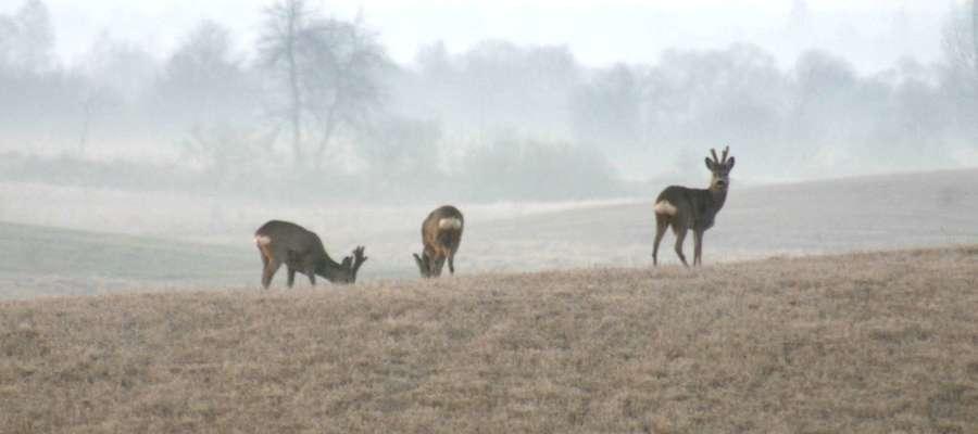 W nowelizowanej obecnie ustawie Prawo łowieckie Ministerstwo Środowiska proponuje zwiększenie odległości obszaru, na którym myśliwi mogą prowadzić polowania, od zabudowań mieszkalnych, z obowiązujących obecnie 100 m do 150 m