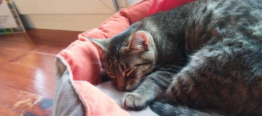 Jaskier- szósty kot adoptowany z Kociej Kawiarni OKK