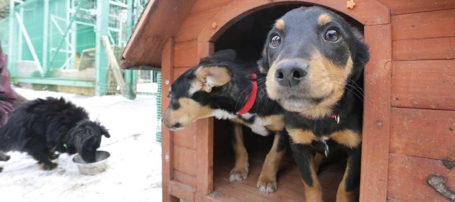 Tomaryny schronisko  Tomaryny-schronisko dla psów do Olsztyniaka