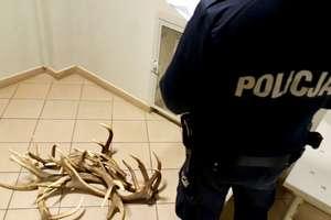 Kradł poroża jeleni z fermy. Może dostać za to nawet 5 lat