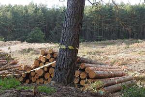 Tragedia w lesie. Mężczyzna został przygnieciony drzewem