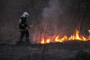 Strażacy gasili płonące, suche trawy [FILMY]