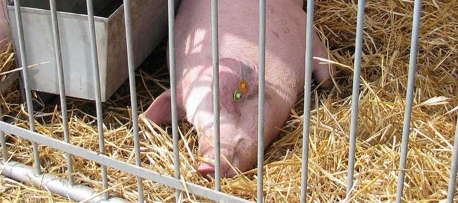 W sytuacji zwiększającego się zagrożenia pomorem zostało znowelizowane rozporządzenie w sprawie środków podejmowanych w związku z wystąpieniem afrykańskiego pomoru świń, które weszło w życie 28 lutego. Zgodnie z nim do zasad bioasekuracji muszą się stosow