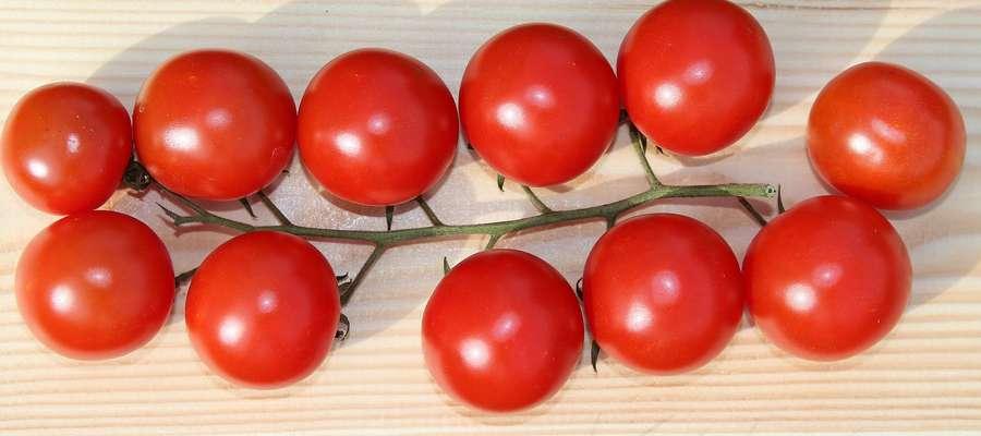 Czy ktoś wyobraża sobie polską kuchnię bez pomidorów? Pomidor powinien mieć obowiązkowe miejsce w codziennym jadłospisie.