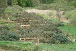Wycinają kawał lasu w Zielonowie w gminie Stawiguda. Czy powstanie tu nowe osiedle?