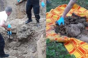 Szkielet człowieka zakopany w lesie. Śledczy pracują nad rozwikłaniem tajemnicy sprzed 20 lat [ZDJĘCIA] [VIDEO]
