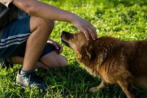 """""""Ważne są więzi, a nie więzy"""". Dzieci ze szpitala psychiatrycznego spotkały się z psami ze schroniska"""