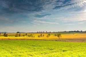 Rolnicy czekają na dopłaty. Czy cierpią za ekologię?