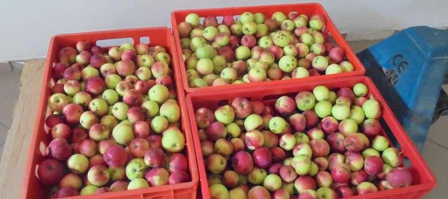 Jedna z działkowiczek przekazała trzy skrzynki jabłek