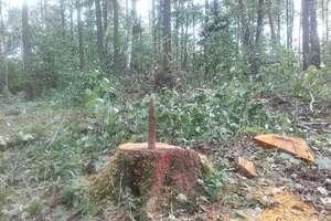 Powojenne niewybuchy znalezione podczas prac leśnych
