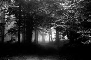 Mężczyzna zgubił się w lesie. Policjanci pomogli mu wrócić do domu