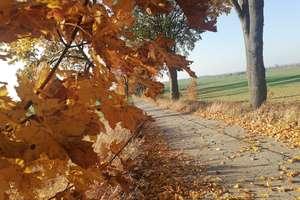 Słoneczna i ciepła jesień. Jak długo utrzyma się pogodna aura?