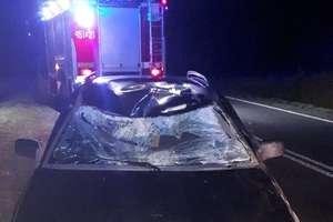 Samochód uderzył w łosia. Zwierzę zginęło [ZDJĘCIA]