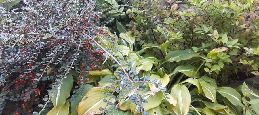 Ogród przy Drodze
