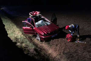 Łoś nie przeżył zderzenia z Jaguarem. Kierowca w szpitalu