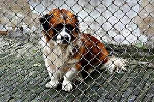 Obrońcy zwierząt interweniowali w Parku Dzikich Zwierząt w Kadzidłowie
