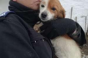 Animalsi uratowali kolejnego psa
