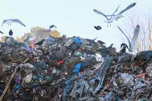 Trudna sprawa z tymi śmieciami...