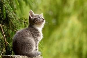 Kot a sprawa ludzka