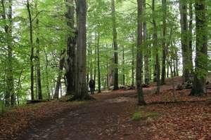 Zamiast lasów wyrosną inwestycje? Ustawa o lasach do zmiany.