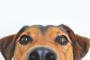 Pies najlepszym przyjacielem człowieka!