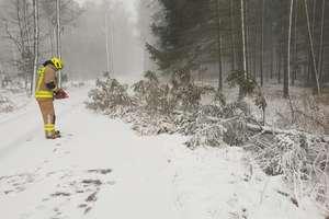 Zima na drogach. Śnieg, ślisko, połamane drzewa i gałęzie