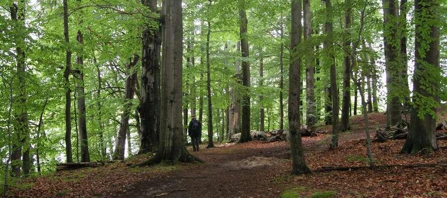 Decyzje o zamianach mają podejmować Generalny Dyrektor Lasów Państwowych, Minister Środowiska i Minister Gospodarki.