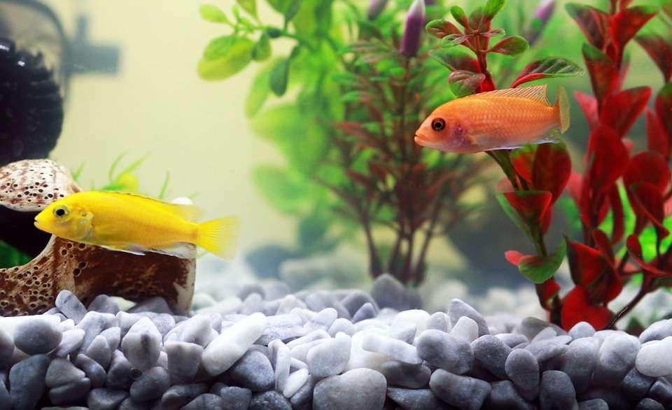 Czy warto kupić lampę UV do akwarium? - full image