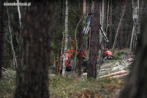 Na Mierzei rozpoczęła się wycinka drzew pod przekop