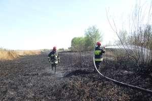 W tym roku strażacy 33 razy gasili pożary traw