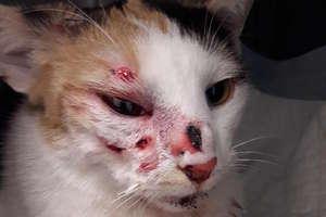 Strzelał do kotki jak do tarczy. Teraz stanie przed sądem