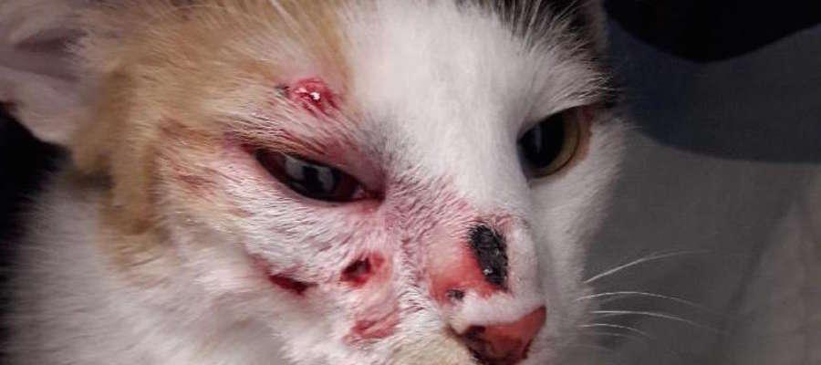 Kotka została postrzelona z broni śrutowej