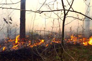 W lesie spalił się hektar ściółki