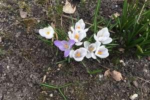 Czy w Wielkanoc mamy szansę na wiosenną pogodę? Sprawdzamy pierwsze prognozy!