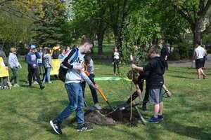 W Olecku wyrosło 50 nowych drzew