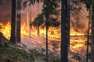 Pożar lasu w Spychowie