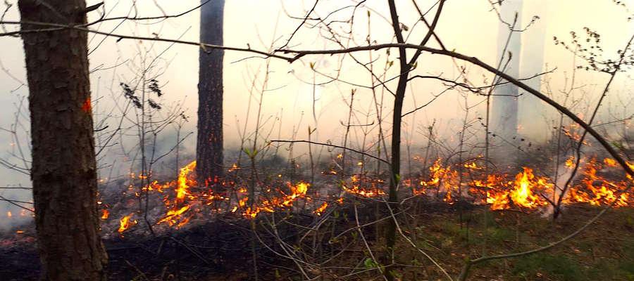 Płonący las pod Tereszewem