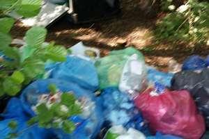 Kolejne worki ze śmieciami w środku lasu. Iławska radna apeluje!
