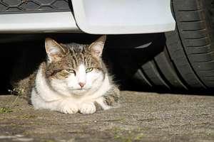 W walce z kocią bezdomnością. Trwa realizacja kolejnego projektu minionej edycji OBO