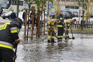 Jak grzyby po deszczu, tak tablice rejestracyjne po ulewie... Zgubiłeś swoje? Sprawdź, czy są już na komendzie  [ZDJĘCIA]