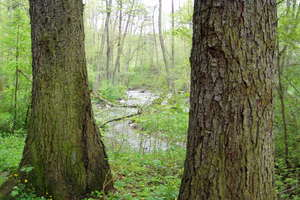 W lesie tak łatwo się zgubić