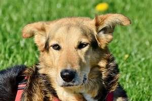 Nie kupuj – adoptuj! Urzędnicy zachęcają do adopcji psów