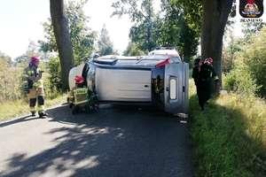 Honda uderzyła w drzewo