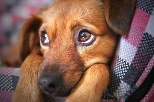 Nie kupuj - adoptuj! Psiaki ze schroniska czekają na nowy dom