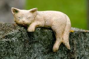 Czy w Olsztynie powstanie cmentarz dla zwierząt?
