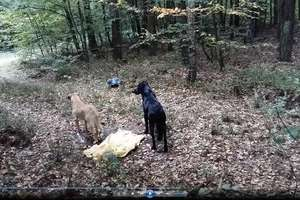 Ktoś porzucił w workach w lesie dwa psy. Pomóżcie znaleźć sprawcę!