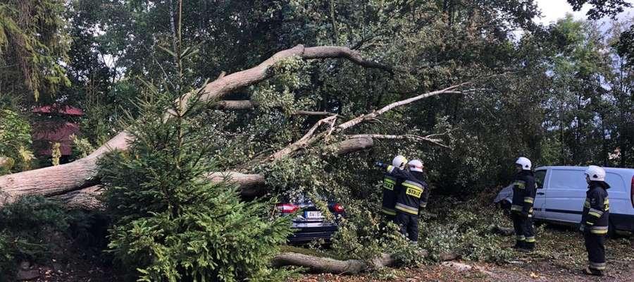 Powalone drzewa uszkodziły kilka samochodów