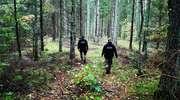 Kolejne osoby zgubiły się w lesie zbierając grzyby. Straż Graniczna apeluje o uwagę!